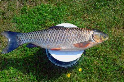 Dzień ryby