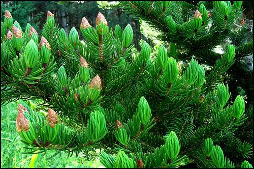 Kalendarz - zielone rośliny